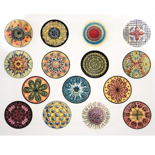 Mandala Circles Decal